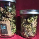 Buds in Jars
