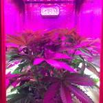 Aeroponic Grow Cabinet