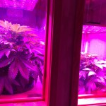 Built-In Aeroponic Cabinets