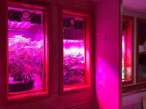 Built-In Aeroponic Grow Cabinets