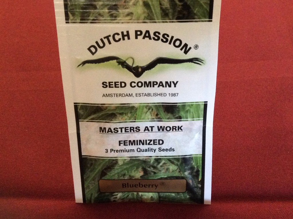 Dutch Passion Blueberry